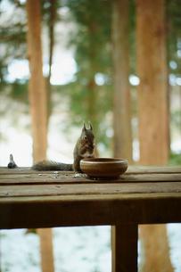 エサを食べるリスの写真素材 [FYI02060719]