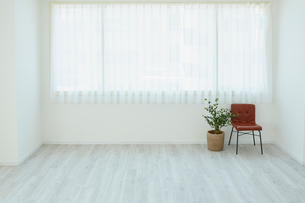 窓と椅子と観葉植物の写真素材 [FYI02060741]