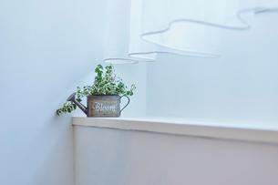 窓辺の観葉植物の写真素材 [FYI02060829]
