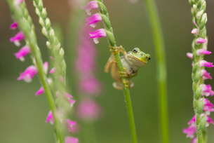 カエルの写真素材 [FYI02060979]