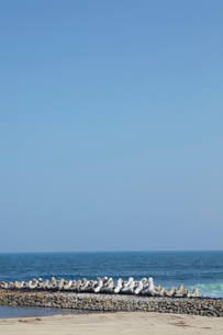 海岸のテトラポットの写真素材 [FYI02060986]