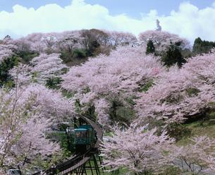 桜と船岡観音の写真素材 [FYI02061035]