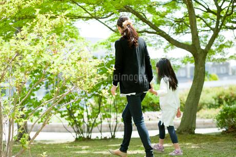 新緑の公園を散歩する女の子と母親の後ろ姿の写真素材 [FYI02061169]