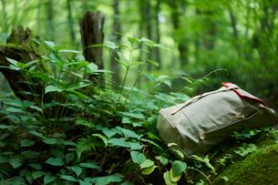 森の中に置いたリュックサックの写真素材 [FYI02061308]