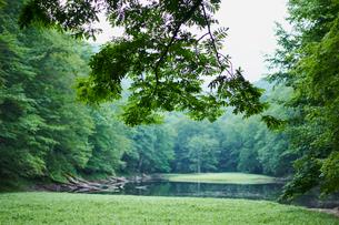 緑の森林と沼の写真素材 [FYI02061384]