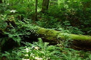 森の倒木の写真素材 [FYI02061838]