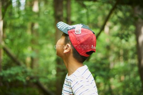 森林で見上げる少年の横顔の写真素材 [FYI02062085]