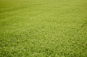 緑の田園の写真素材 [FYI02062133]