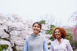 花見をする外国人女性2人の写真素材 [FYI02062139]