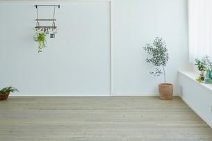 観葉植物がある白い壁の部屋の写真素材 [FYI02062469]