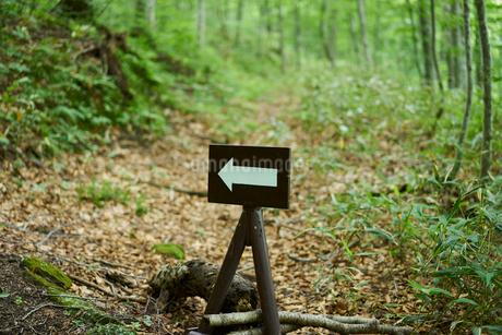 森の中の矢印看板の写真素材 [FYI02062505]