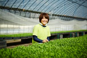 ビニールハウスで働く笑顔の農婦の写真素材 [FYI02062743]