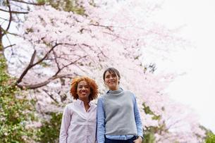 花見をする外国人女性2人の写真素材 [FYI02062760]