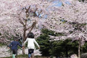 手を繋ぎ走る男の子と女の子の写真素材 [FYI02063175]