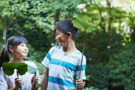 葉を持ち見つめ合う兄妹の写真素材 [FYI02063238]