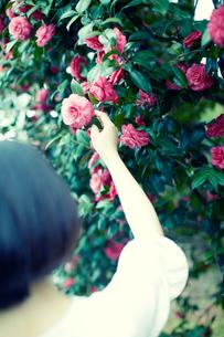 花を手にとる女性の写真素材 [FYI02063296]