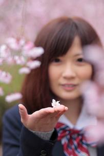 手のひらに桜の花をのせる女子高生の写真素材 [FYI02063451]