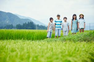 緑の田園に立つ子供達の写真素材 [FYI02064126]