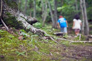 木の根元と子供2人の後ろ姿の写真素材 [FYI02064593]