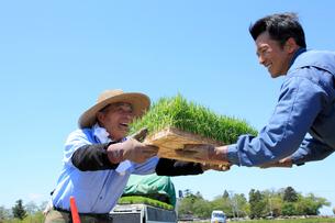 イネの苗を渡す笑顔の農夫の写真素材 [FYI02064743]