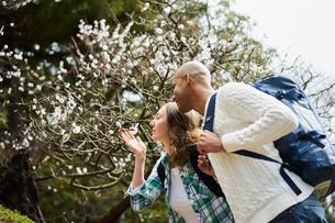 梅の花を見る外国人カップルの写真素材 [FYI02065640]