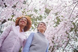 花見をする外国人女性2人の写真素材 [FYI02065857]
