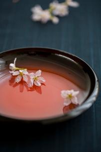 和皿と桜の花の写真素材 [FYI02065884]
