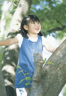 木に登る女の子の写真素材 [FYI02066195]