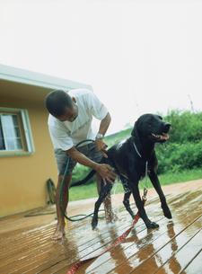 犬を洗う男性の写真素材 [FYI02066250]