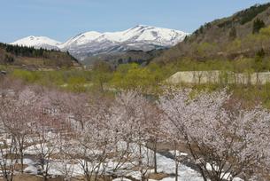 春の寒河江川と月山 山形県の写真素材 [FYI02066529]