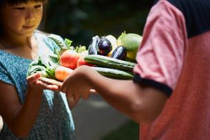 野菜を持つ兄妹の写真素材 [FYI02066614]