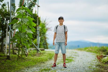 小学生の男の子ポートレートの写真素材 [FYI02067083]
