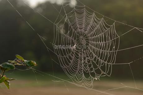 朝露が付いたクモの巣の写真素材 [FYI02067195]