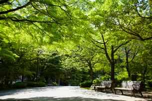 勾当台公園 宮城県の写真素材 [FYI02067207]