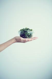 ベビーリーフを盛った器を持つ女性の手の写真素材 [FYI02067334]