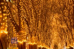 SENDAI光のページェント 宮城県の写真素材 [FYI02067975]