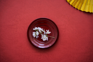 赤い皿にのせた桜の写真素材 [FYI02068129]