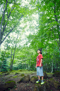 緑の木々を見上げる男の子の写真素材 [FYI02068465]