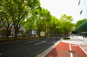定禅寺通り 宮城県の写真素材 [FYI02068515]