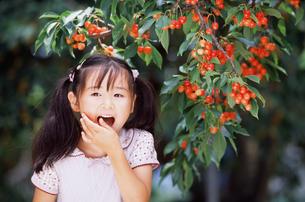 さくらんぼを食べる女の子の写真素材 [FYI02068566]