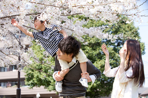 息子を肩車する父親と笑顔で寄り添う母親の写真素材 [FYI02068936]
