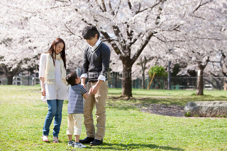 桜が咲く公園で遊ぶ3人家族の写真素材 [FYI02068994]