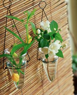 吊り下げた花の写真素材 [FYI02069997]