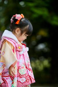 七五三和装の女の子の写真素材 [FYI02070162]