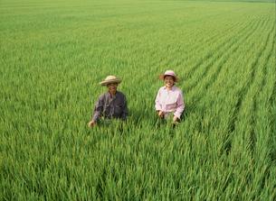 田んぼの中の夫婦の写真素材 [FYI02071032]
