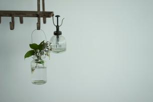 霧吹きと花の写真素材 [FYI02071169]