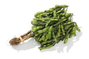 枝豆の写真素材 [FYI02071359]
