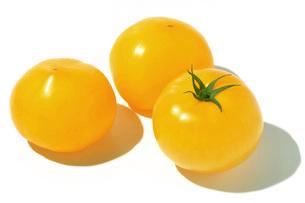 イエロートマトの写真素材 [FYI02071638]