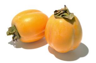 西条柿(サイジョウガキ)の写真素材 [FYI02072001]
