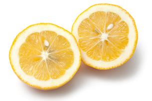メイヤーレモンの写真素材 [FYI02072561]